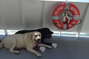 dogs and Island Queen Life Saving Ring